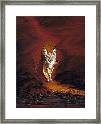 Mountain Lion Framed Print by Carl Genovese