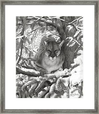 Mountain Lion Hideout Framed Print