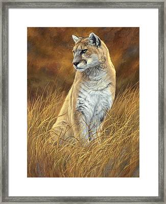 Mountain Lion Framed Print by Lucie Bilodeau