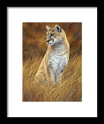 Puma Framed Prints