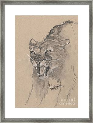 Mountain Lion Sketch Framed Print by Callie Smith