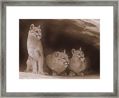 Mountain Lion Trio On Alert Framed Print by Diane Alexander