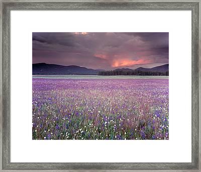 Mountain Meadow Purple Framed Print by Leland D Howard