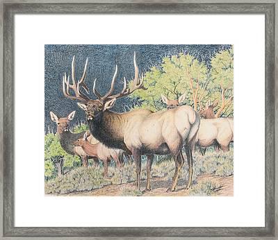 Mountain Monarch Framed Print