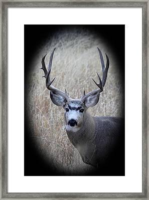 Mountain Mule Deer Framed Print by Shane Bechler