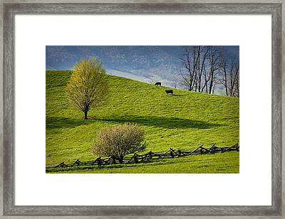 Mountain Pasture With Two Cows Framed Print