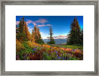 Mountain Rainier  Sunset Framed Print by Emmanuel Panagiotakis
