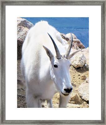 Mountain Resident Framed Print