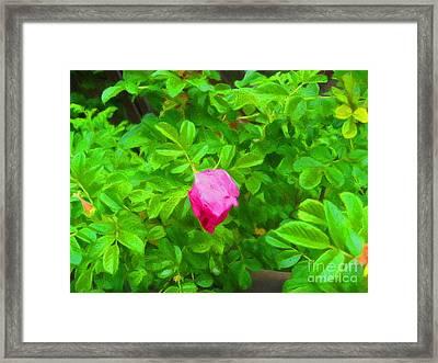 Mountain Rose Framed Print