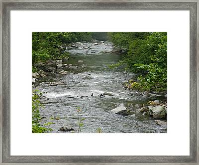 Mountain Stream Framed Print by Linda Brown