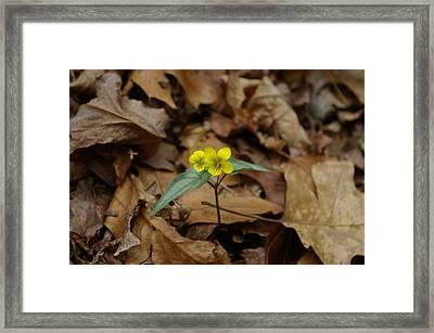 Mountain Violet Framed Print by James Carter
