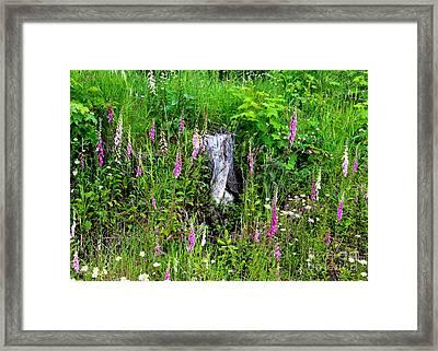 Mountain Wildflowers Framed Print by Carol Groenen