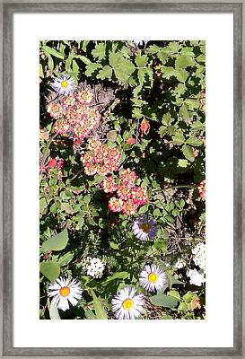 Framed Print featuring the photograph Mountain Wildflowers by Fortunate Findings Shirley Dickerson