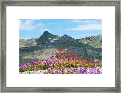 Mountains And Wildflowers Framed Print