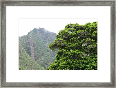 Mountains In Maui Hawaii With Fog And Tree In Foreground Framed Print