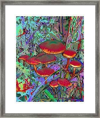 Mountian Mushrooms Framed Print