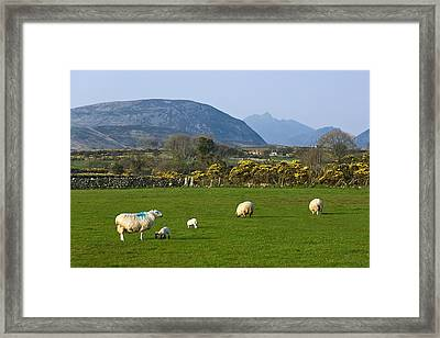 Mourne Mountains Near Kilkeel Framed Print by Jane McIlroy