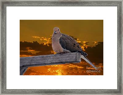 Framed Print featuring the photograph Mourning Dove Orange Sky by Marjorie Imbeau