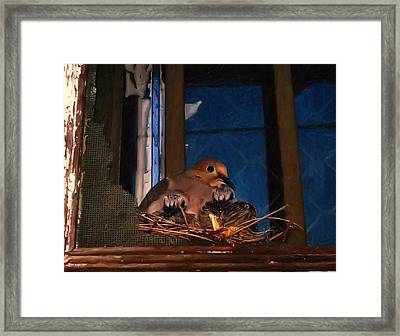 Mourning Dove With Chicks Framed Print