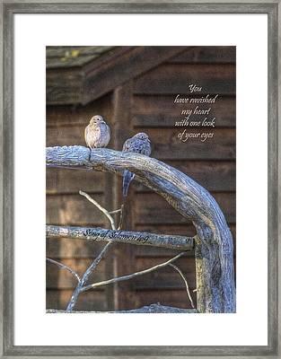 Mourning Doves Framed Print by Cheryl Birkhead