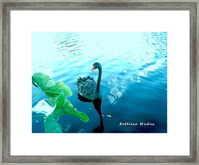 Mourning Swan Song Framed Print