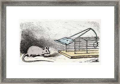 Mouse And Mouse Trap Framed Print