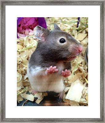 Mouse In The House Framed Print by Carla Carson