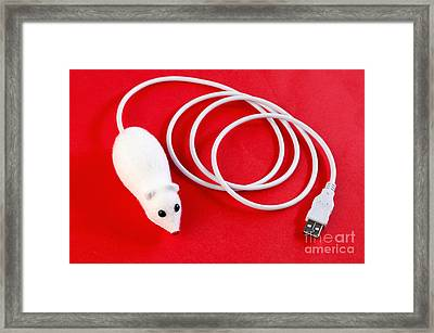 Mouse On Red Background Framed Print by William Voon