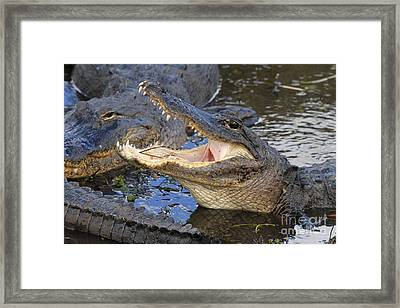 Mouth In The Middle Framed Print by Adam Jewell