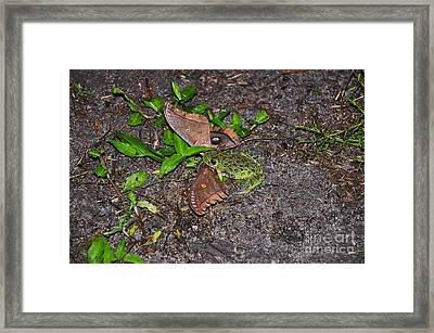 Mouthful Of Moth Framed Print by Al Powell Photography USA