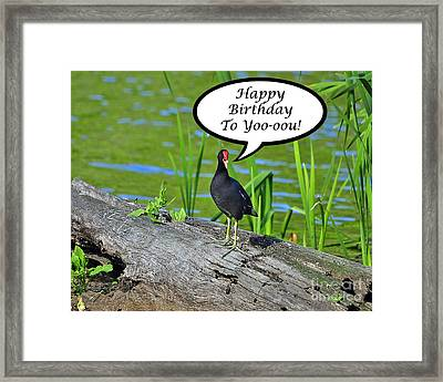 Mouthy Moorhen Birthday Card Framed Print by Al Powell Photography USA
