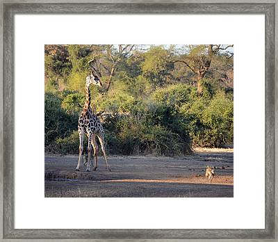 Move Along Framed Print