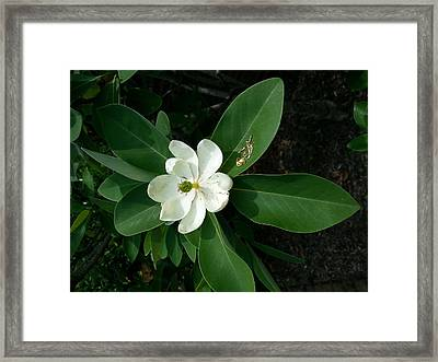 Moved By Nature Framed Print