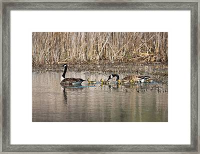 Moving Along Framed Print by Dale Kincaid