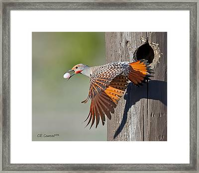 Moving Day Framed Print by CR  Courson