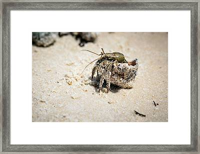 Moving Day Framed Print