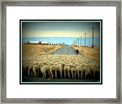 Framed Print featuring the photograph Moving Sheep by Heidi Manly