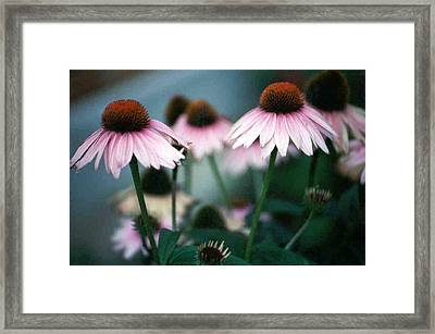 Mprints - Pink Lady Framed Print by M  Stuart
