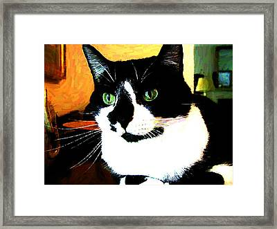Mprints - Pookie 3 Framed Print by M  Stuart