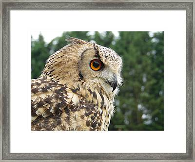 Mr Amber Eyes Framed Print