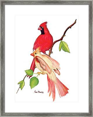 Mr. And Mrs. Cardinal Framed Print