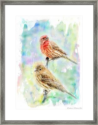 Mr And Mrs House Finch - Digital Paint Framed Print by Debbie Portwood