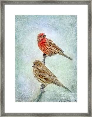 Mr And Mrs House Finch Digital Paint Framed Print by Debbie Portwood