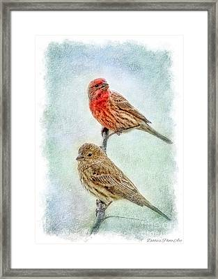 Mr And Mrs House Finch Digital Paint With Frame Framed Print by Debbie Portwood