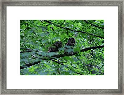 Mr And Mrs Owl Framed Print