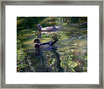 Mr And Mrs P W Duck Framed Print