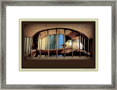 Mr. And Mrs Tweety In Sepia  Framed Print by Danielle  Parent