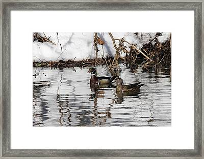 Mr. And Mrs. Wood Duck Framed Print by Jill Bell