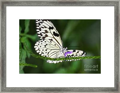 Mr. B Framed Print by Mary Lou Chmura
