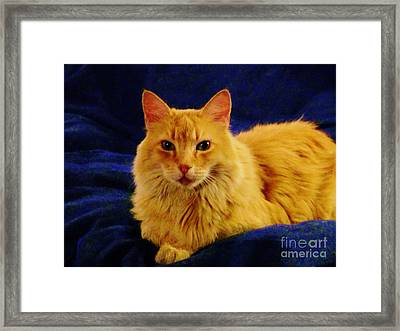 Mr. Bear Cat - Il Framed Print by Jacquelyn Roberts